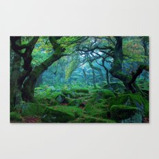 Enchanted forest mood Canvas Print