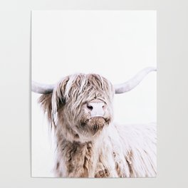 HIGHLAND CATTLE PORTRAIT Poster