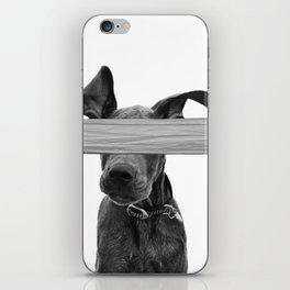 Dog Crosses Line iPhone Skin