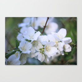 Hawthorne Flowers After Rain Canvas Print
