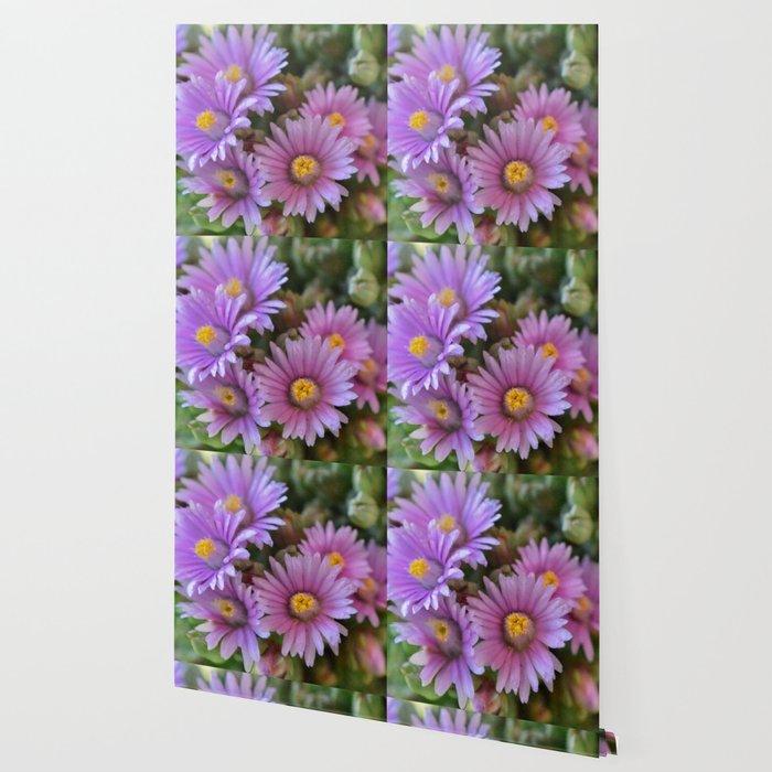 Blooming Succulents Wallpaper