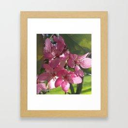 Sunny Springtime Framed Art Print