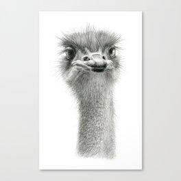 Cute Ostrich Expression SK055 Canvas Print
