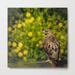Hawk in sunflowers Metal Print