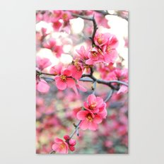 Evening Quince Canvas Print