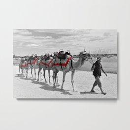 Geelong Camel Walk Metal Print