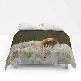 Bush Bear Comforters