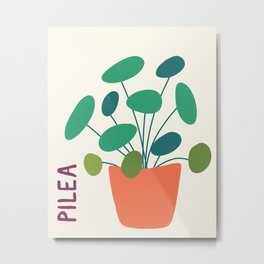 Pilea Plant Illustration // Hand-drawn Modern Organic Botanical Metal Print