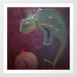 The Chameleon  Art Print