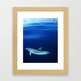 Dolphin and blues Framed Art Print