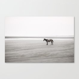 Horse a la playa Canvas Print