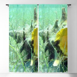 Watercolor Sealife Queen Conch 01, Tranquil Coast Blackout Curtain