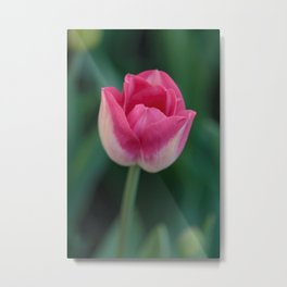 The Beauty of Pink Metal Print