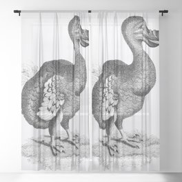 Illustration of Dodo from Zoological lectures delivered at the Royal institution in the years 1806-7 Sheer Curtain