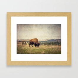 Bison Land Framed Art Print