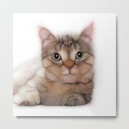kitten cat posing for portret Metal Print