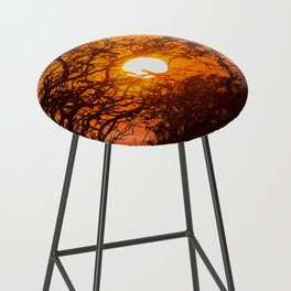 Sultry sun setting behind the sausage tree Bar Stool