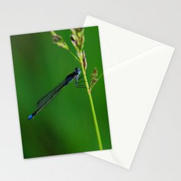 Patagonian damselfly Stationery Cards