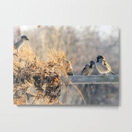 Winter Nesting Birds Metal Print