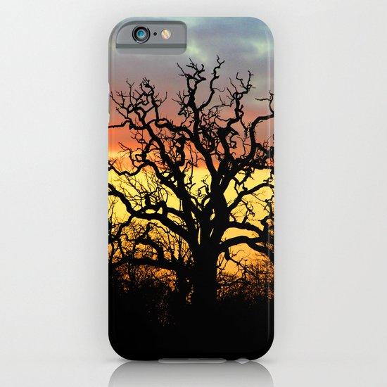 Winter sunset behind a curly tree iPhone & iPod Case