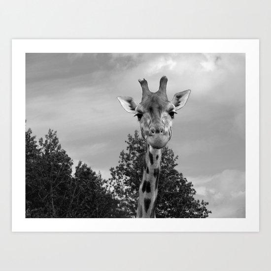 Giraffe. Art Print