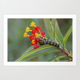 Monarch & Milkweed Art Print