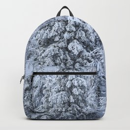 Snowy forest at the White Mountain Backpack