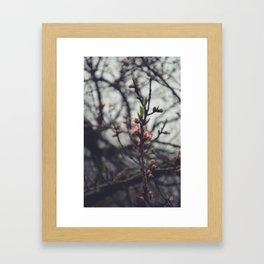 Peach Blossoms II Framed Art Print