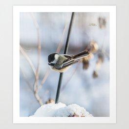 Chickadee waiting Art Print