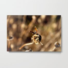 Sepia Butterfly Metal Print