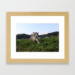 Cat found something. Framed Art Print