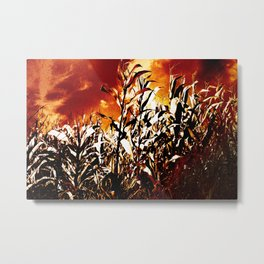 Fire in the corn field Metal Print