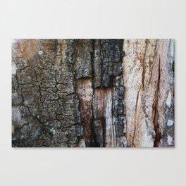Tree Bark close up Canvas Print