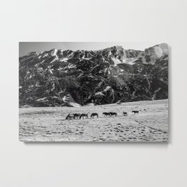 Horses in mountains Metal Print