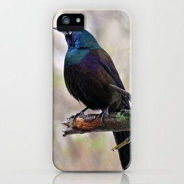 Yonder  (Common Grackle) iPhone Case
