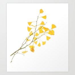 branch of ginkgo biloba Art Print