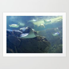In the Tank: Flight Art Print