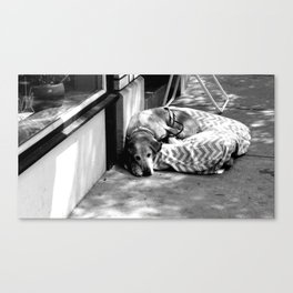 Street Dog Canvas Print
