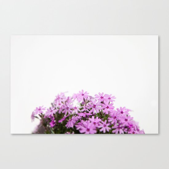 phlox {pink} Canvas Print