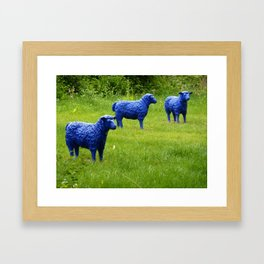 blue sheep Framed Art Print