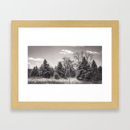 Winter Pines II Framed Art Print