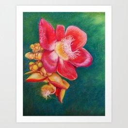 Canonball Flower in soft pastel Art Print