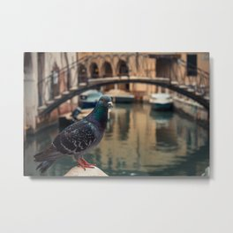 Dove perched on one of the points of the city of Venice Metal Print