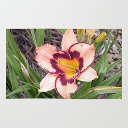 Pink daylily growing in Queensland Rug