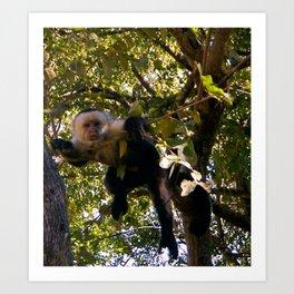 Capuchin Gaze Art Print