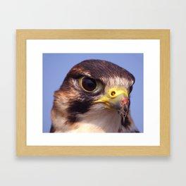 Lanner Falcon Framed Art Print