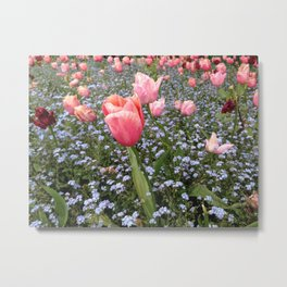 A Sea of Tulips Metal Print