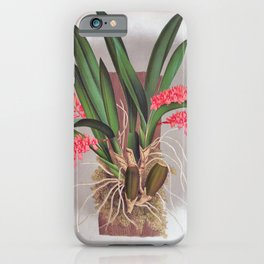 Pink Fern Slipper Orchids Vintage Rodriguezia Bungerothi iPhone Case