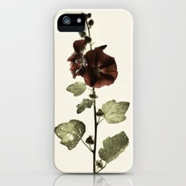 Alcea Hollyhock Vintage Botanical iPhone Case