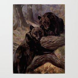 Vintage Brown Bear Painting (1909) Poster